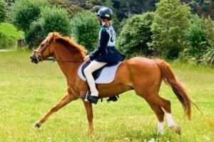 Грациозная лошадка